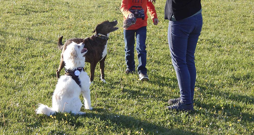 Terapia con animales en Vitoria